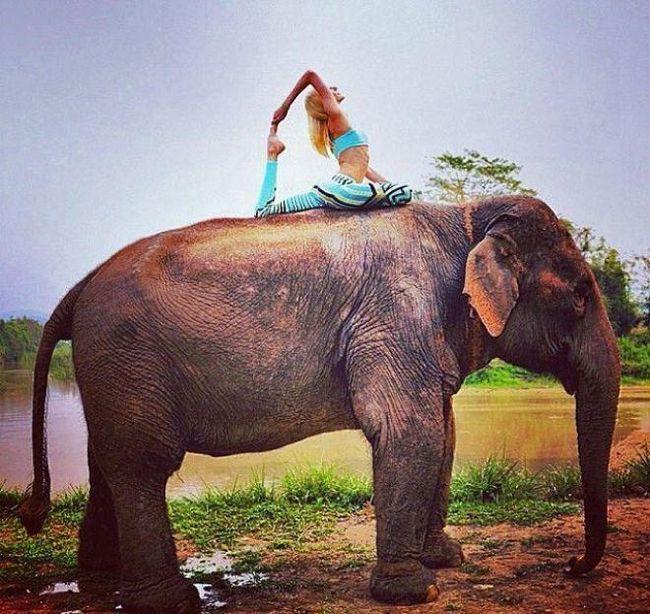 дівчина верхи на слоні